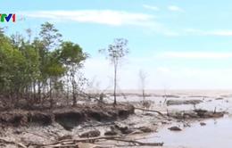 Cà Mau: Đê biển Đông sạt lở nghiêm trọng