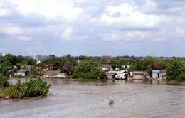 Cà Mau: Tiếp diễn sạt lở đất ven sông tại Năm Căn