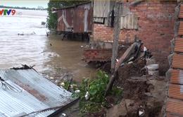 Sạt lở nghiêm trọng ở bờ sông Vĩnh Long