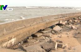 Triều cường gây sạt lở nghiêm trọng tuyến đê biển ở Ninh Thuận