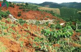Tiếp tục xảy ra sạt lở tại Lâm Đồng, hàng chục ha cà phê có nguy cơ mất trắng