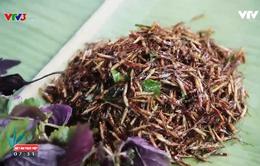 Bọ xít rang lá chanh - Đặc sản Tây Bắc thách thức những tín đồ ẩm thực