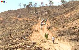 Tiếp tục làm rõ và xử lý vụ phá rừng tại An Lão