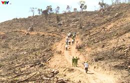 Bình Định kiên quyết làm rõ và xử lý nghiêm vụ phá rừng tại An Lão