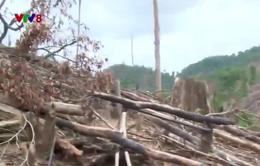 Thấy gì qua vụ phá rừng ở Tiên Lãnh, Quảng Nam ?
