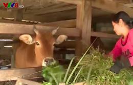 Hà Tĩnh tập trung phòng chống rét cho gia súc