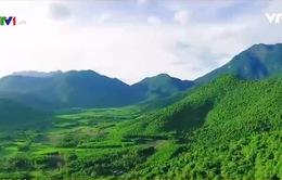 Khám phá Bạch Mã - Cung đường du lịch xanh
