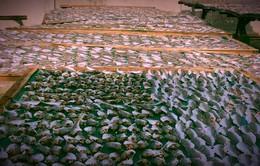 Sự thật đằng sau quy trình chế biến cá khô ở làng chài Đất Đỏ khiến ai cũng phải rùng mình