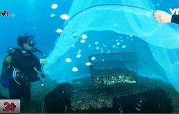 Phòng khám dưới nước dành cho động vật biển