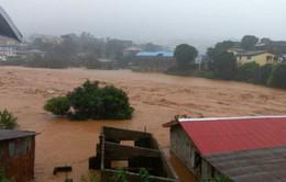 Sierra Leone khẩn trương cứu hộ nạn nhân vụ lở bùn kinh hoàng