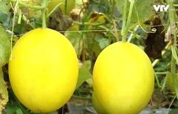 Sử dụng chế phẩm sinh học trong nông nghiệp cho thu nhập cao