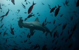 Lượng oxy trong nước biển suy giảm nghiêm trọng
