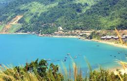 Độ che phủ rừng tại Đà Nẵng đạt hơn 43%