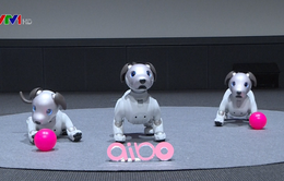 Sony tái sinh robot cún cưng Aibo để đón chào năm Mậu Tuất 2018