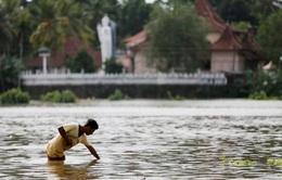 Sri Lanka đối mặt dịch bệnh sau lũ