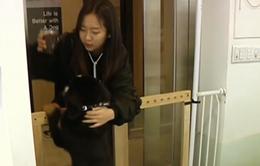 Nuôi thú cưng - Ngành nghề hấp dẫn cho các startup Hàn Quốc