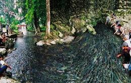 Bí ẩn suối cá thần ở Thanh Hóa