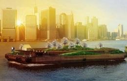 Độc đáo khu vườn nổi trên thuyền tại New York, Mỹ
