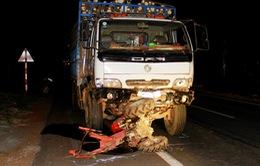 Nguy cơ tai nạn giao thông vào ban đêm