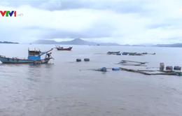 Tái thiết vùng nuôi thủy sản sau bão