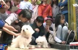 Bùng nổ xu hướng trị liệu tâm lý bằng động vật tại Hàn Quốc