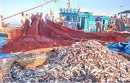 Tận diệt nguồn lợi thuỷ hải sản ven bờ - Nguy hại đến đâu?