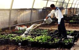 Tăng gia thực phẩm tươi trên quần đảo Trường Sa
