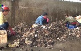 Quảng Trị: Nhiều người dân lén bỏ tạp chất vào mủ cao su
