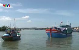 Ngư dân Quảng Ngãi được mùa hải sản đầu năm
