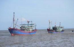 Cam kết không đánh bắt hải sản bất hợp pháp