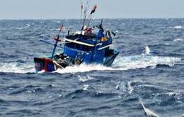 Nhiều tàu cá Bình Định gặp nạn trên biển