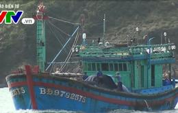 Bình Định tiếp nhận tàu cá và thuyền viên gặp nạn trên biển
