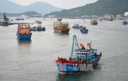 Áp thấp nhiệt đới di chuyển nhanh, còn gần 1000 tàu thuyền của Đà Nẵng, Quảng Ngãi trên biển