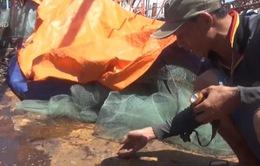 Doanh nghiệp chịu kinh phí khắc phục tàu vỏ thép Bình Định hư hỏng