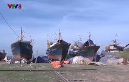 Tàu cá đóng theo NĐ 67 bị hư hỏng: Xem xét trách nhiệm với từng cá nhân, tập thể sai phạm