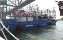 25 chủ tàu vỏ thép ở Bình Định phải chịu nợ quá hạn