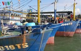 Gia hạn nợ đối với chủ tàu vỏ thép nằm bờ