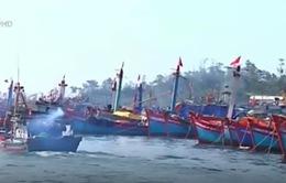 Thừa Thiên - Huế: Nhiều tàu cá trúng đậm sau chuyến ra khơi