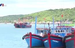 Chậm tháo gỡ vướng mắc bảo hiểm tàu cá