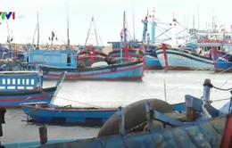 Rủi ro từ những tàu cá công suất nhỏ