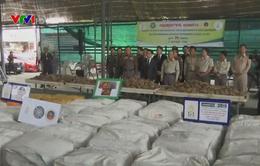 Thái Lan thu giữ gần 3 tấn vẩy tê tê