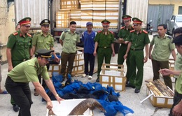 Thanh Hóa: Bắt giữ vụ vận chuyển 31 cá thể tê tê