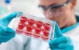 Ứng dụng tế bào gốc trong điều trị bệnh