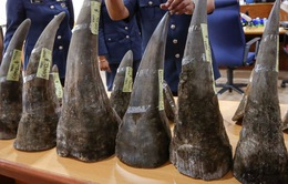Malaysia bắt giữ sừng tê giác trị giá 3,1 triệu USD