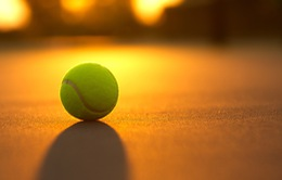 Trái bóng Tennis và những thống kê thú vị