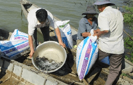 Ninh Thuận: Thả hơn 50.000 con cá giống xuống sông Dinh