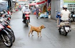 Phạt đến 100 triệu đồng vi phạm hành chính trong lĩnh vực thú y