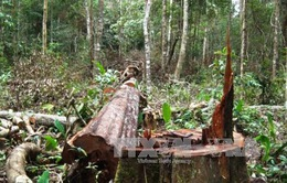 Đăk Nông thu hồi dự án du lịch gây mất rừng