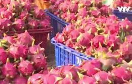 Việt Nam dự Hội chợ quốc tế trái cây và rau củ quả 2017 tại Berlin