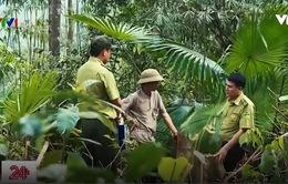 Thanh Hóa truy quét lâm tặc phá rừng